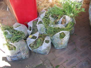 Some of the 15 bags of weeds