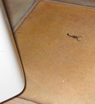Scorpion near the fridge