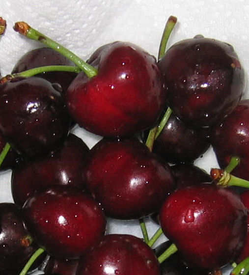 Fresh cherries from Donnybrook, Western Australia