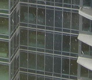 Snow falling in Seattle in April