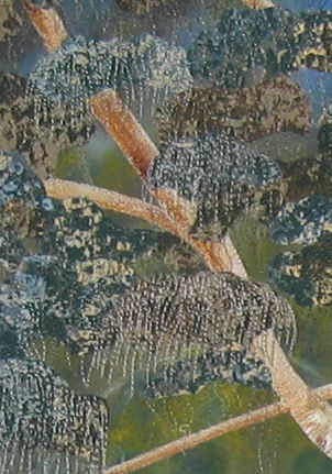 Stitching detail - leaf clusters and trunk
