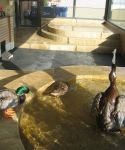 peabody_duck_palace05