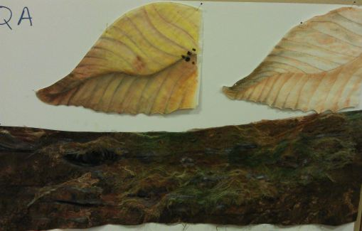 Susan's mossy log and leaves