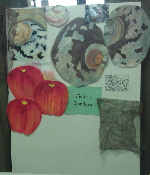 Victoria's shells