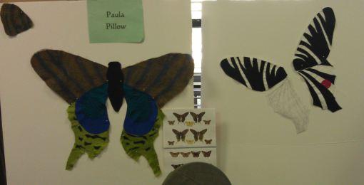 Paula's butterflies