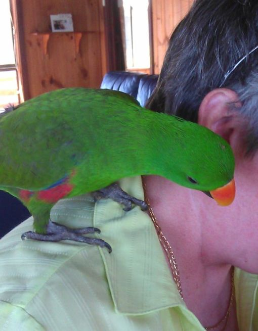 cheeky_parrot