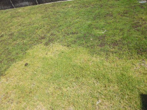 lawn_20151202c