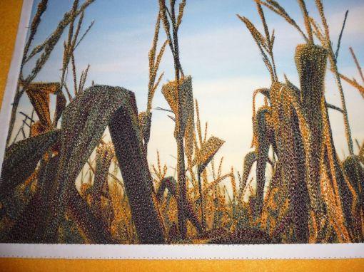 cornfield_02