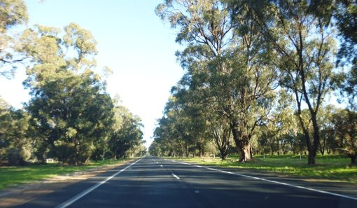 Forrest Highway, heading south, near Myalup about 4pm