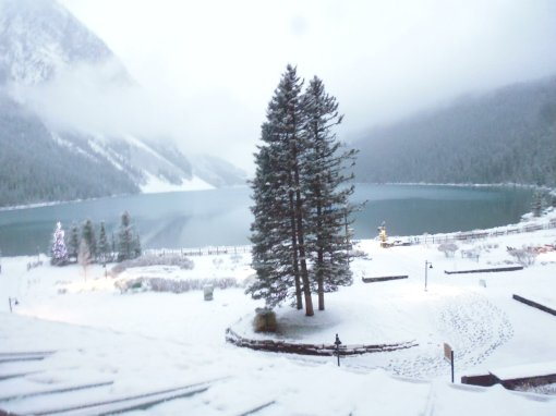 View from my room first thing this morning, after overnight snow. Lake Louise, Alberta, Canada, 4 November 2018